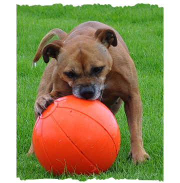 Staffie Ball - One Size 240 MM